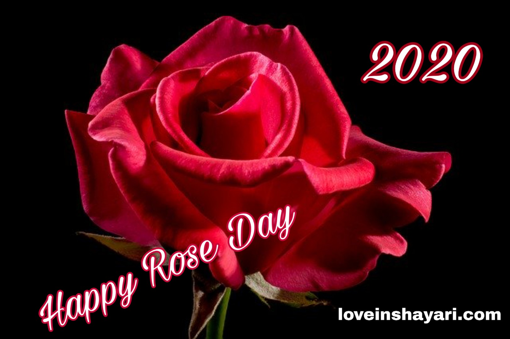 Photo of Happy rose day 2020 wishes, shayari, sms,quotes