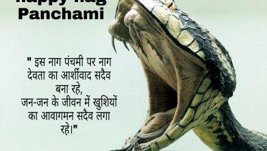 Photo of Nag panchami wishes shayari quotes messages