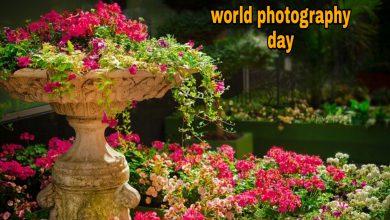 Photo of World photography day status whatsapp status 2020